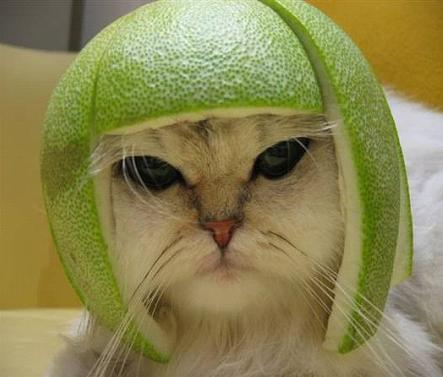 Helmet made of lime