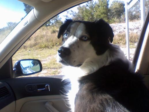 Beauty Kya in the car