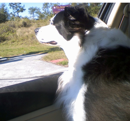 Kya looking out the window